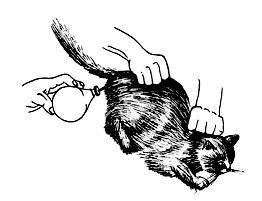 http://www.catsgo.ru/images/books/434/image037.jpg